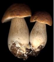 Fond de teint hydratant Sothys : sous la silicone le champignon !