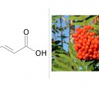 L'acide sorbique : que cache donc ce conservateur issu du sorbier ?
