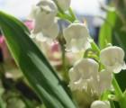 Le Lilial®, une molécule parfumante sur siège éjectable !