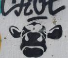 La graisse bovine, un ingrédient pas vache !