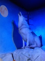 La poudre Blur expert de Sisley, y a pas de loup !