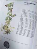 Belladone… drôle de nom pour une plante toxique !