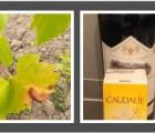 Solaires Caudalie, des formules qui traitent le mildiou ?