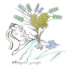 La gomme adragante, la belle endormie du secteur cosmétique !