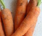 Dans le domaine solaire, si on se fie à la carotte les SPF sont cuits !