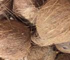 Huile de coco, issue de l'arbre de vie what else ?