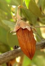 Huile de jojoba, avant, pendant ou après le Soleil, une huile qui doit trouver sa juste place !