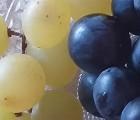 Sa majesté... l'huile de pépins de raisin !
