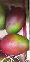 Le beurre de mangue, un ingrédient qui a les deux pieds sur terre !