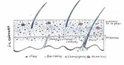 Le microbiote cutané, un univers qui commence à être courtisé par les cosmétologues
