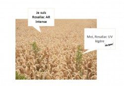 Rosacée et La Roche-Posay, séparons le bon grain de l'ivraie !
