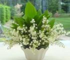Le traditionnel muguet du 1er mai, une trop belle occasion de recevoir de Colette une leçon d'art floral