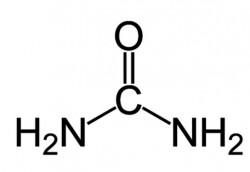 L'urée, histoire d'une molécule qui a plus d'un tour dans son sac !