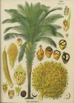 Quelle différence entre huile de palme et huile de palmiste ?